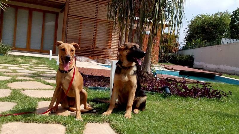 Adestrador a Domicílio Preço Bela Vista - Adestrador e Hotel para Cães