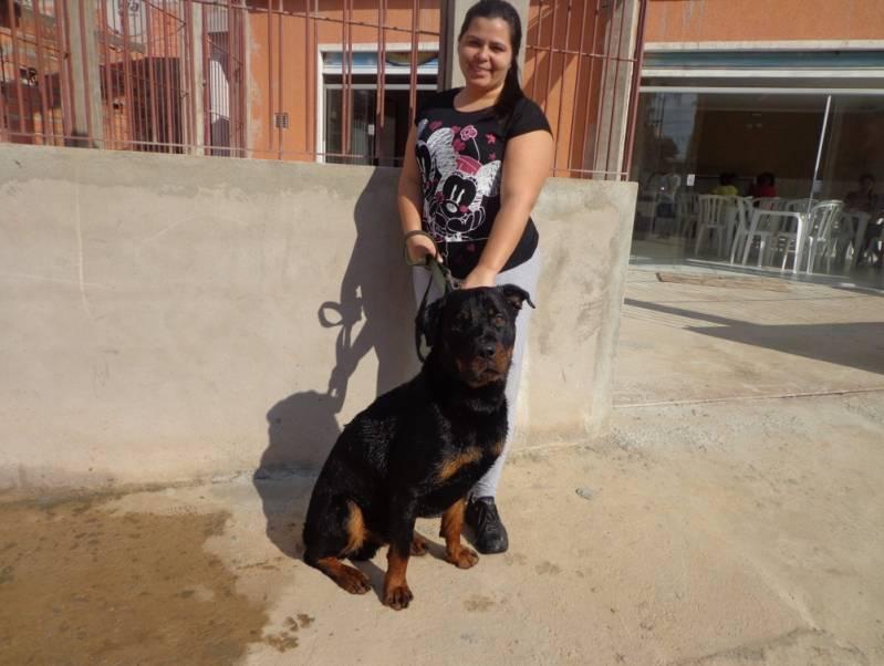 Adestrador Canino Carapicuíba - Adestrador e Hotel para Cães