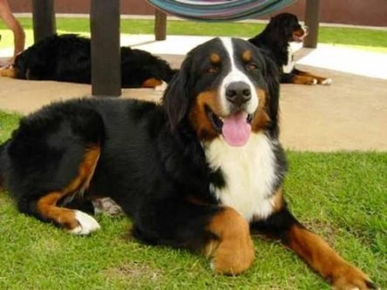 Adestrador Comportamental de Cachorro Preço Jaguaré - Adestrador e Hotel para Cães