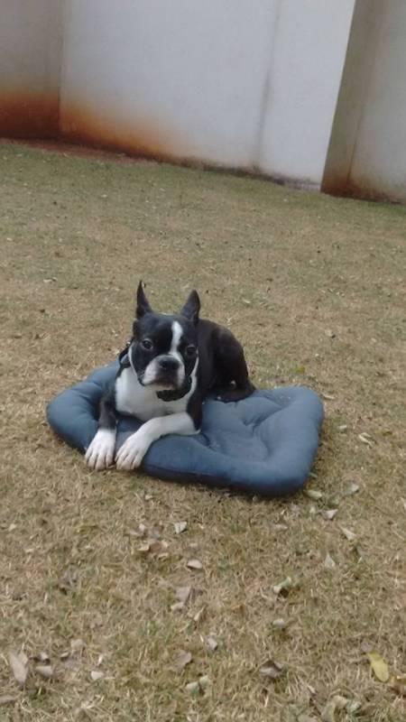 Adestrador Comportamental de Cachorro Bela Vista - Adestrador e Hotel para Cães