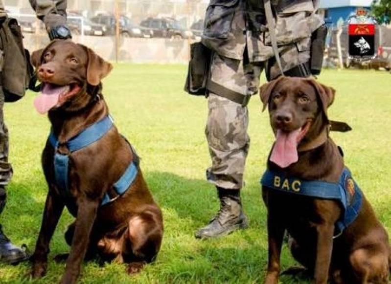 Adestrador de Labrador Preço Barueri - Adestrador e Hotel para Cães