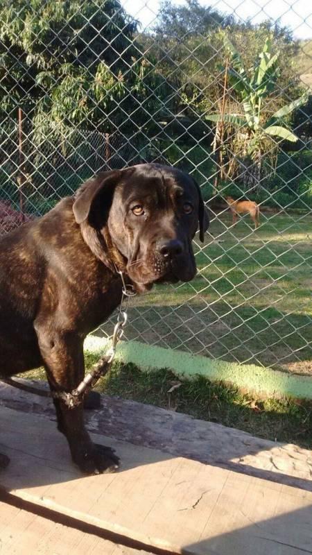 Adestrador para Cachorro de Faro Vila Olímpia - Adestrador e Hotel para Cães