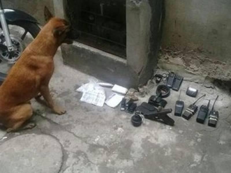Adestrador para Cães de Faro Preço Santana de Parnaíba - Adestrador e Hotel para Cães