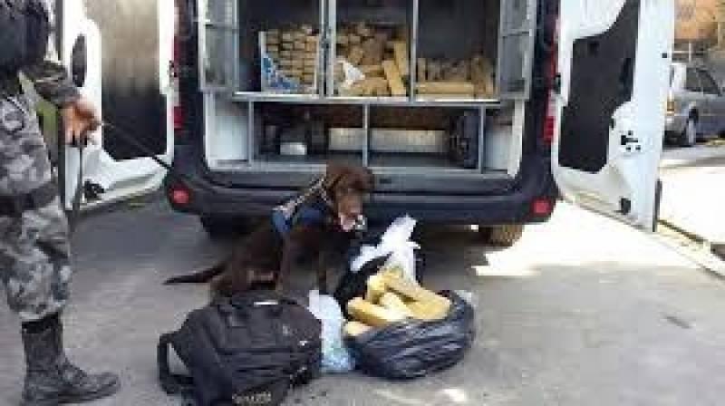 Adestrador para Cães de Faro Aldeia da Serra - - Adestrador e Hotel para Cães