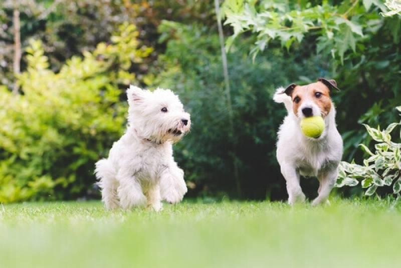 Adestrador para Filhotes de Cachorro Aldeia da Serra - - Adestrador e Hotel para Cães
