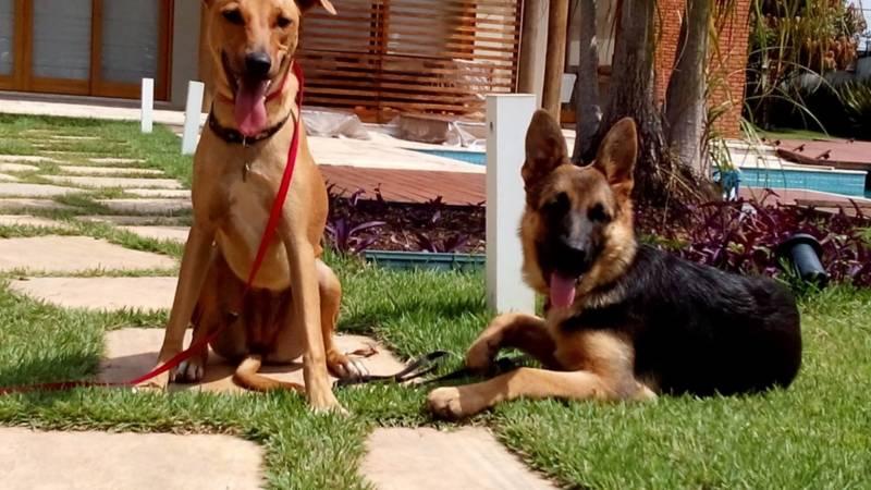 Adestradores a Domicílio Morumbi - Adestrador e Hotel para Cães