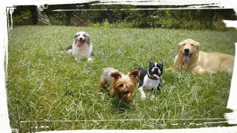 Adestradores Comportamentais de Cachorro Morumbi - Adestrador e Hotel para Cães
