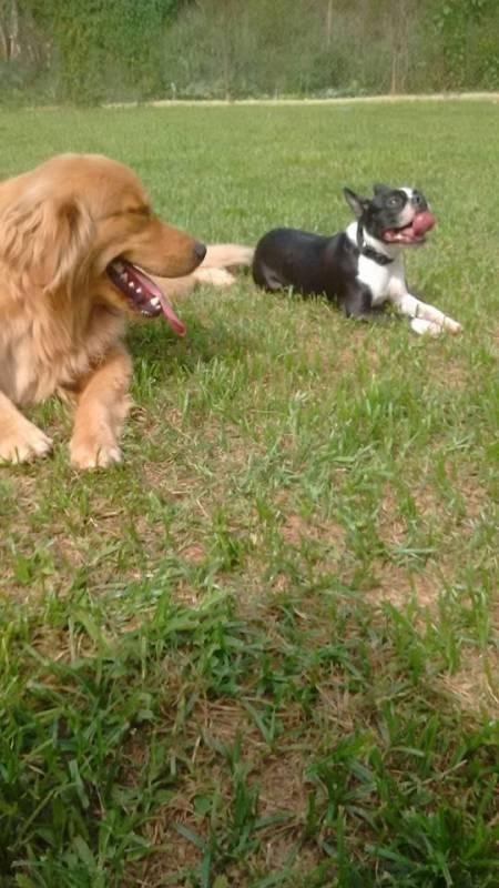 Adestradores de Cães Golden Retriever Alphaville - Adestrador e Hotel para Cães