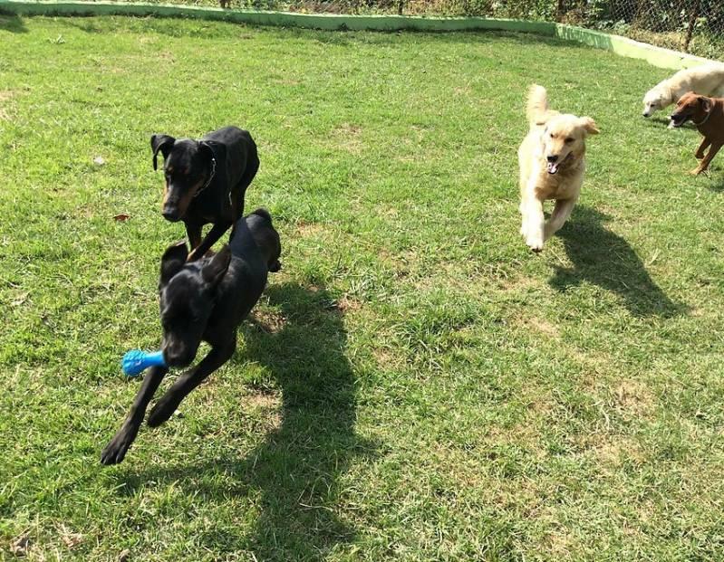 Adestradores e Hotel para Cães Jaguaré - Adestrador e Hotel para Cães