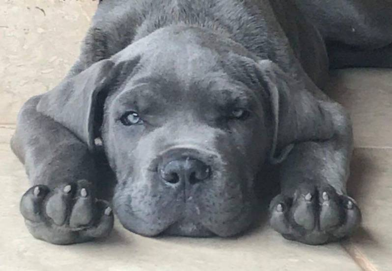 Adestradores para Cachorro de Faro Cotia - Adestrador e Hotel para Cães