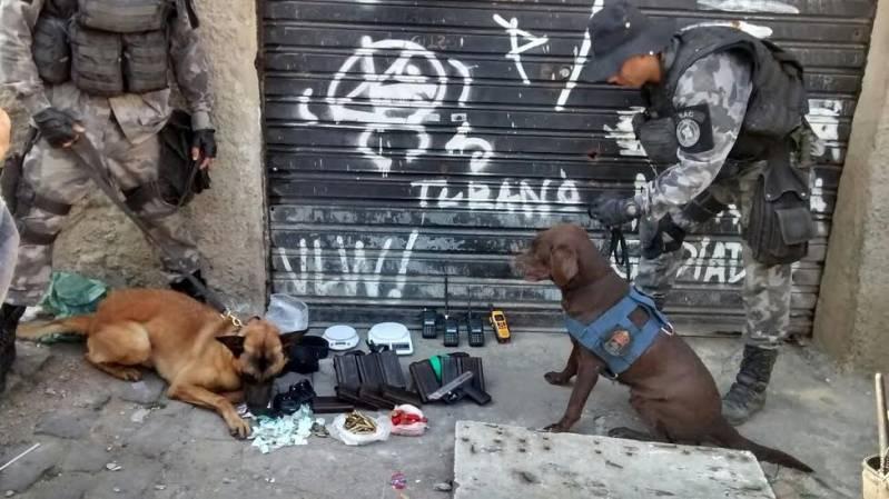 Adestradores para Cães de Faro Osasco - Adestrador e Hotel para Cães