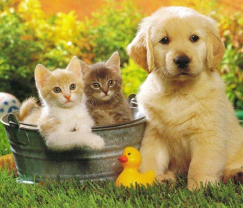 Adestradores para Filhotes de Cachorro Jaguaré - Adestrador e Hotel para Cães