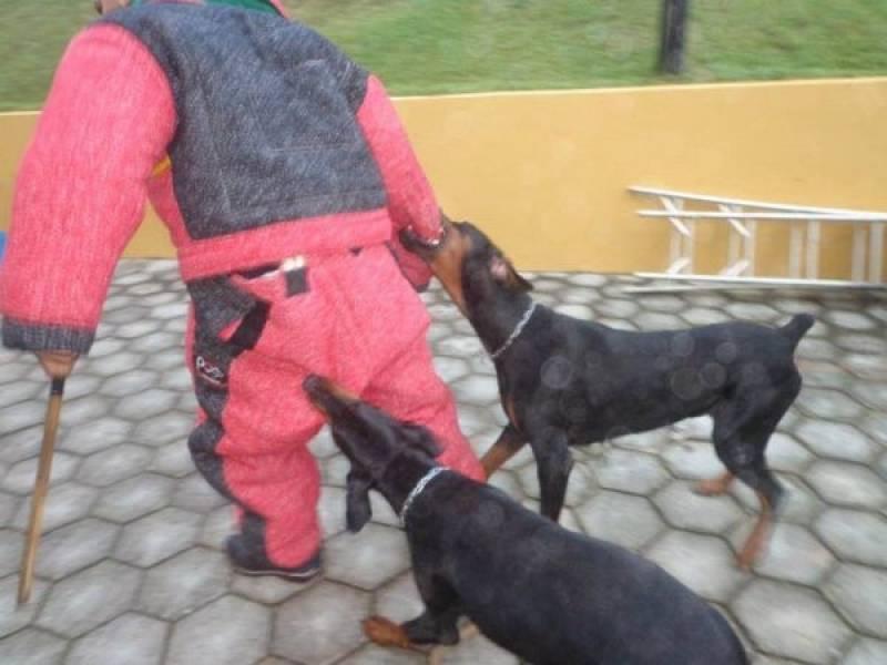 Adestramento para Cães de Guarda Bom Retiro - Treinador de Cão de Guarda