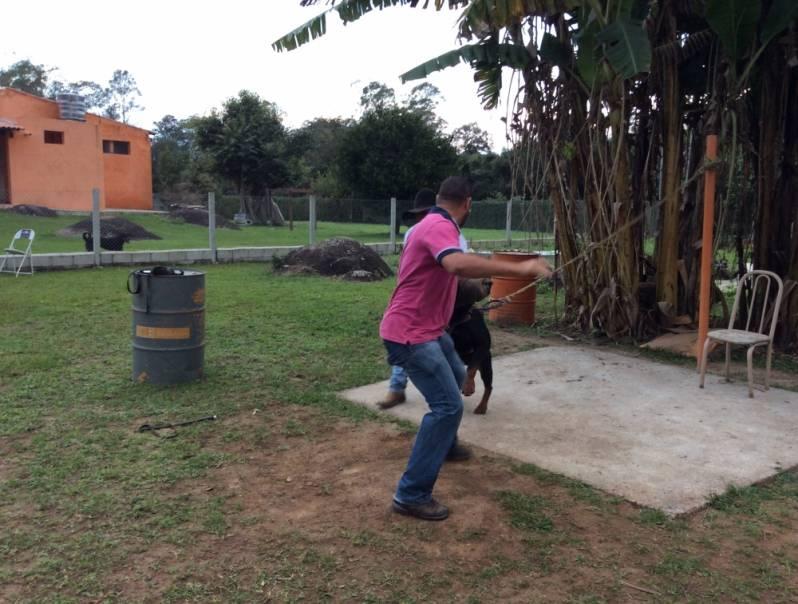Adestramentos para Cão de Guarda Osasco - Adestrador e Hotel para Cães