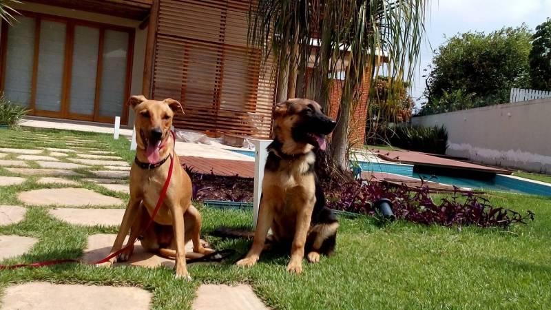 Alugar Cachorro para Guarda Raposo Tavares - Cachorro de Aluguel