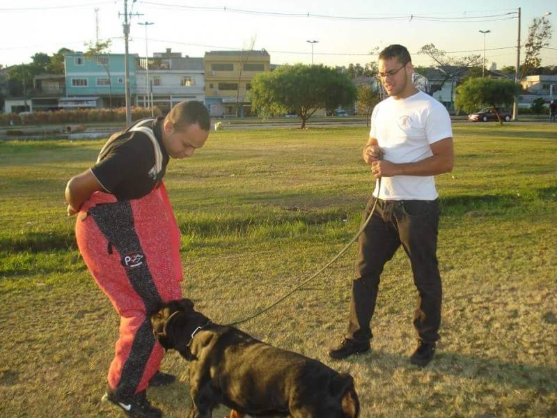 Alugar Cães de Segurança Butantã - Locação de Cães de Guarda