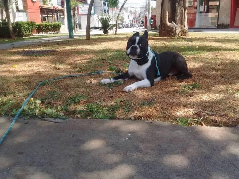 Aluguel de Cão de Guarda em São Paulo Santana de Parnaíba - Cachorro para Aluguel