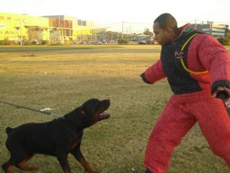 Aluguel de Cão de Guarda Quanto Custa Butantã - Treinador de Cão de Guarda