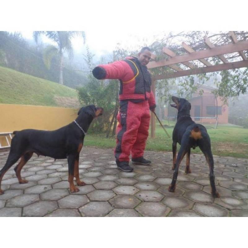 Cachorro de Guarda para Apartamento Barueri - Treinador de Cão de Guarda