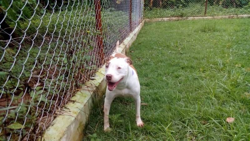 Cachorro para Alugar Raposo Tavares - Alugar Cachorro para Guarda
