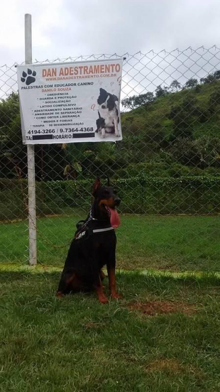 Cachorro para Aluguel Alphaville - Locação de Cachorro de Guarda
