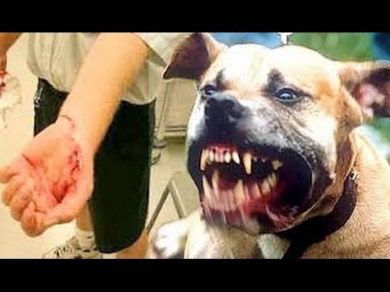 Cães de Guarda Farejadores Bela Vista - Treinamento de Cão Farejador