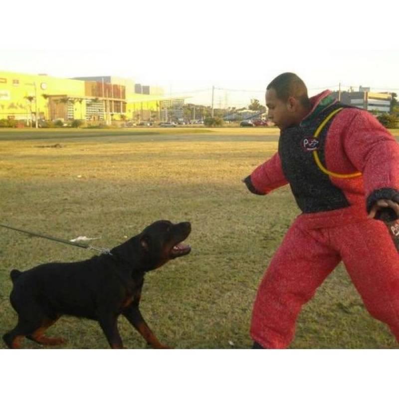 Cão de Guarda de Pequeno Porte Santana de Parnaíba - Treinador de Cão de Guarda