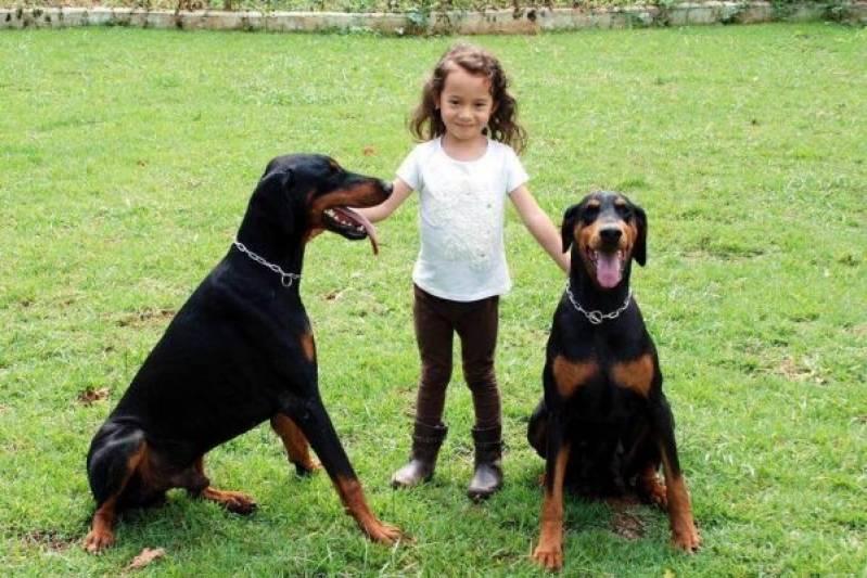 Cão de Guarda em SP Preço Butantã - Treinador de Cão de Guarda