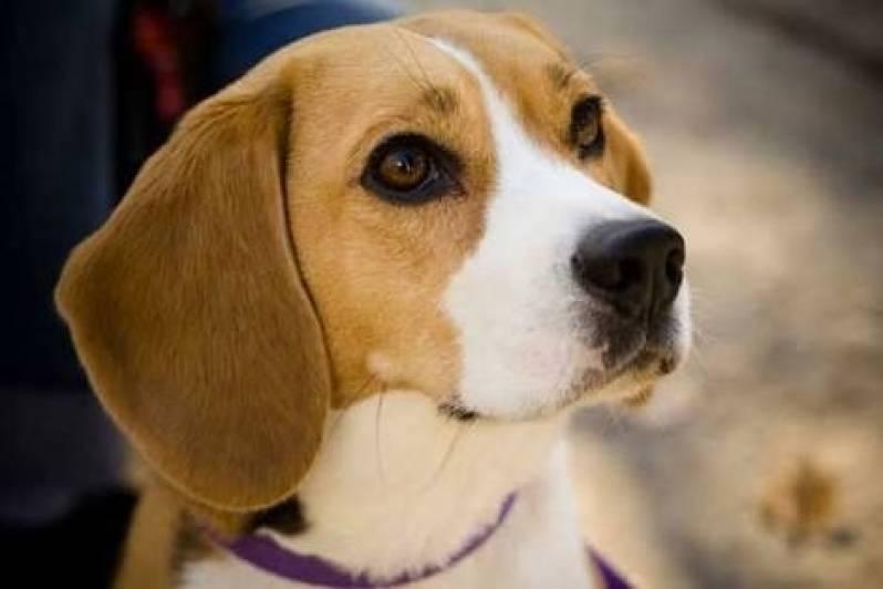 Creche de Cachorro Bela Vista - Creche e Day Care para Cães