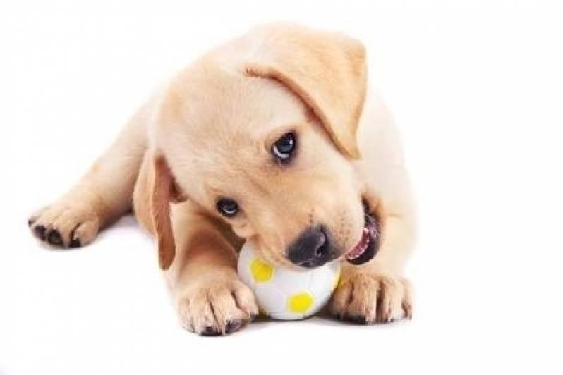 Creche de Cães Morumbi - Creche de Cães