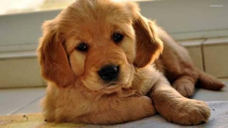 Creche de Hospedagem para Cachorro em SP Cotia - Creche de Cachorro
