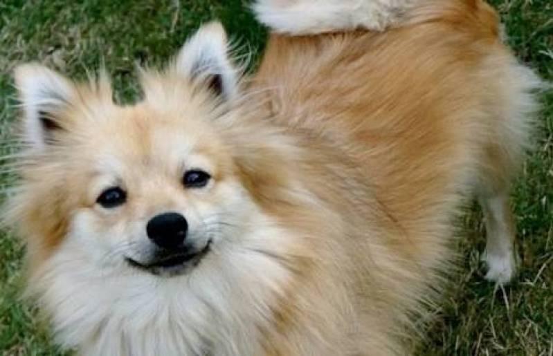 Creche e Day Care para Cães Alto da Lapa - Creche de Cachorros Golden Retriever