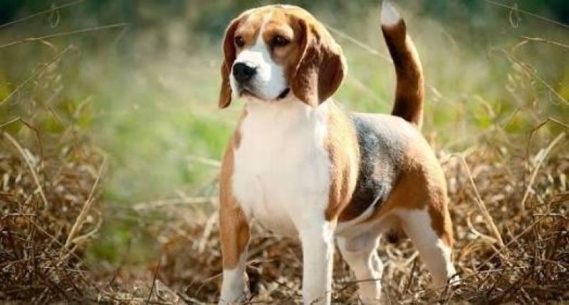 Creche para Animais de Estimação Santana de Parnaíba - Creche de Cachorro
