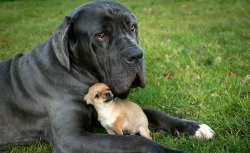 Creche para Cães Butantã - Creche de Cachorros Golden Retriever