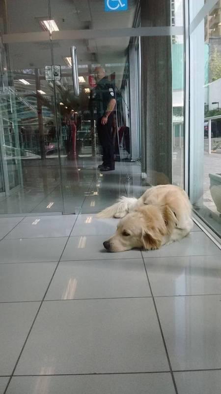 Creches de Hospedagens para Cachorros Morumbi - Creche de Cães