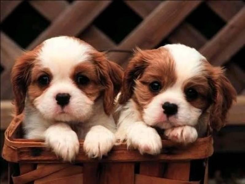 Creches e Pet Shop para Cachorros Raposo Tavares - Creche de Hospedagem para Cachorro