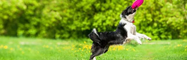 Dan Adestramento - Treinador de Cães
