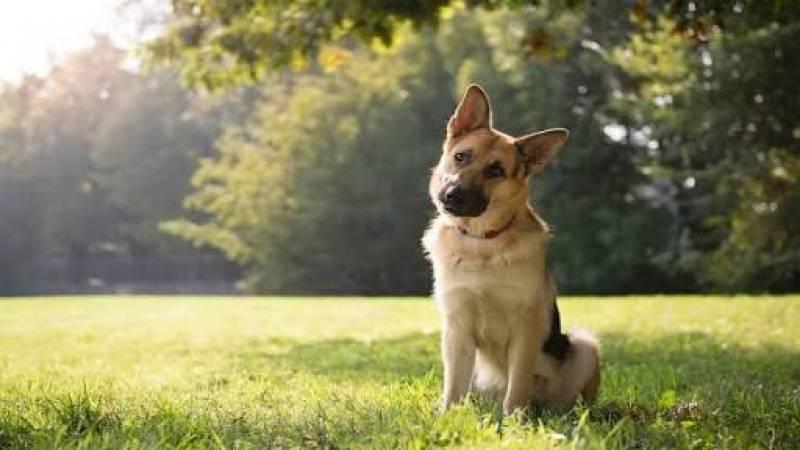 Day Care Canino Butantã - Creche Day Care