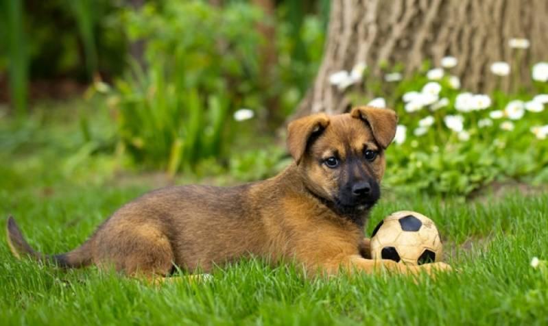 Day Care para Cães Aldeia da Serra - - Creche Day Care