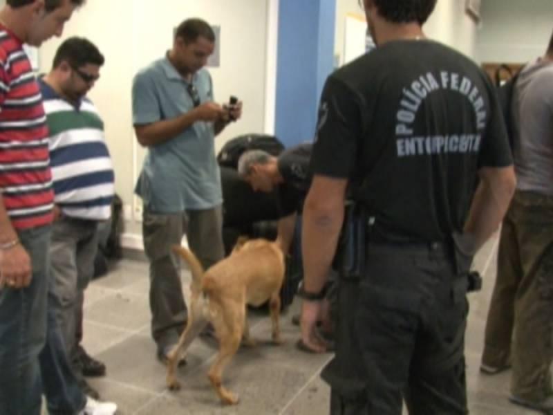Empresas de Segurança Cães de Guarda Osasco - Empresa de Aluguel de Cães