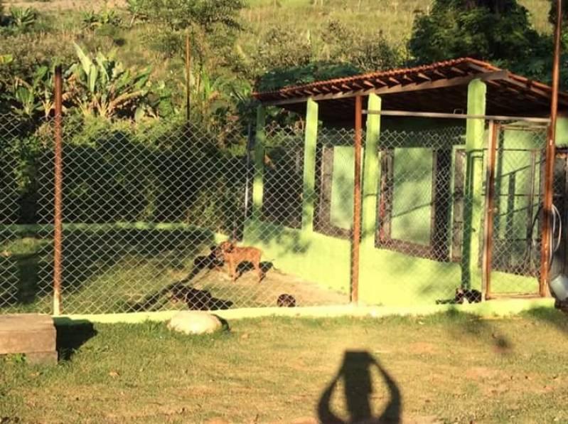 Hotel Canino Vila Olímpia - Creche Day Care