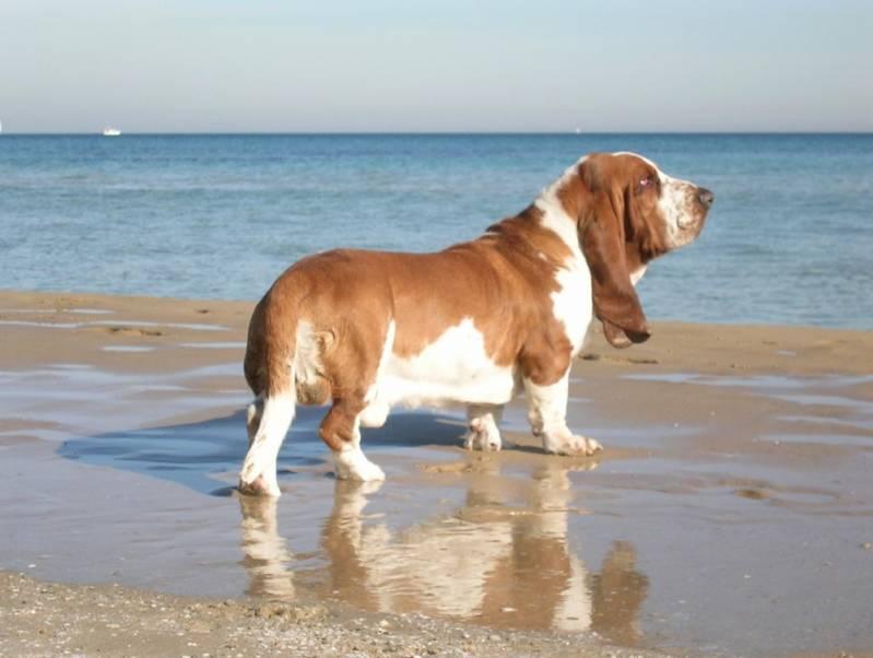 Locação de Cão Farejador Bela Vista - Treinamento de Cão Farejador