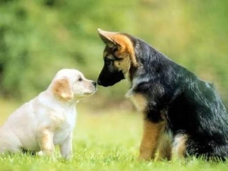 Onde Encontrar Aluguel de Cães de Guarda Santana de Parnaíba - Locação de Cachorro de Guarda