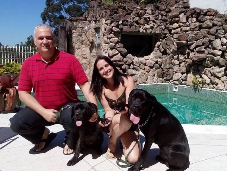 Onde Encontrar Cachorro de Guarda para Locação Rio Pequeno - Aluguel de Cachorro de Guarda em SP