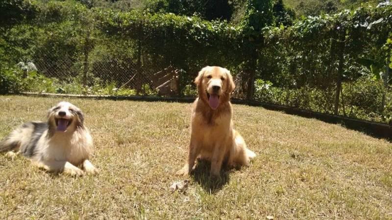 Onde Encontrar Cachorro para Alugar Bom Retiro - Locação de Cachorro de Guarda