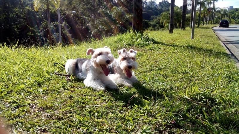 Onde Encontrar Creche de Hospedagem para Cachorro Santana de Parnaíba - Creche e Day Care para Cães