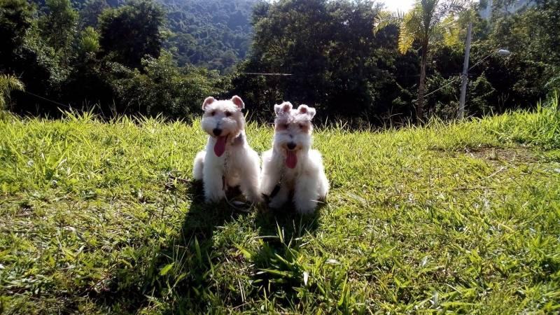 Onde Encontrar Creche Hotel para Cachorro Jardim Bonfiglioli - Creche de Hospedagem para Cachorro