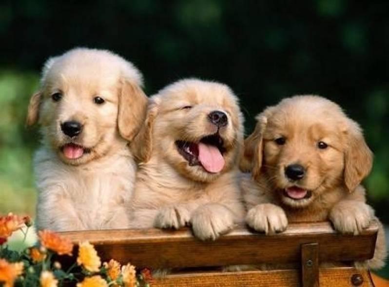 Onde Encontrar Creche para Animais Bom Retiro - Creche de Hospedagem para Cachorro
