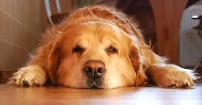 Onde Encontrar Curso de Condução de Cães Morumbi - Empresa de Adestramento de Cães