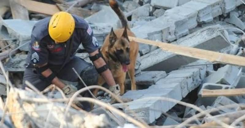 Onde Encontrar Empresa de Segurança Cão de Guarda Vila Olímpia - Cão de Guarda para Alugar
